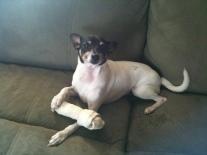 Luca loves Bone.