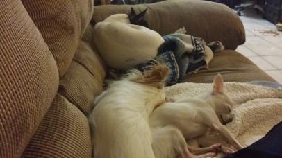 Lazy Dogs.