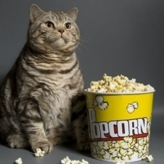 cat eating popcorn