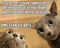 seeing bats