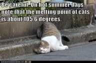 melting temp of cats