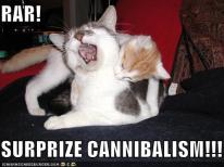 cannibal cats
